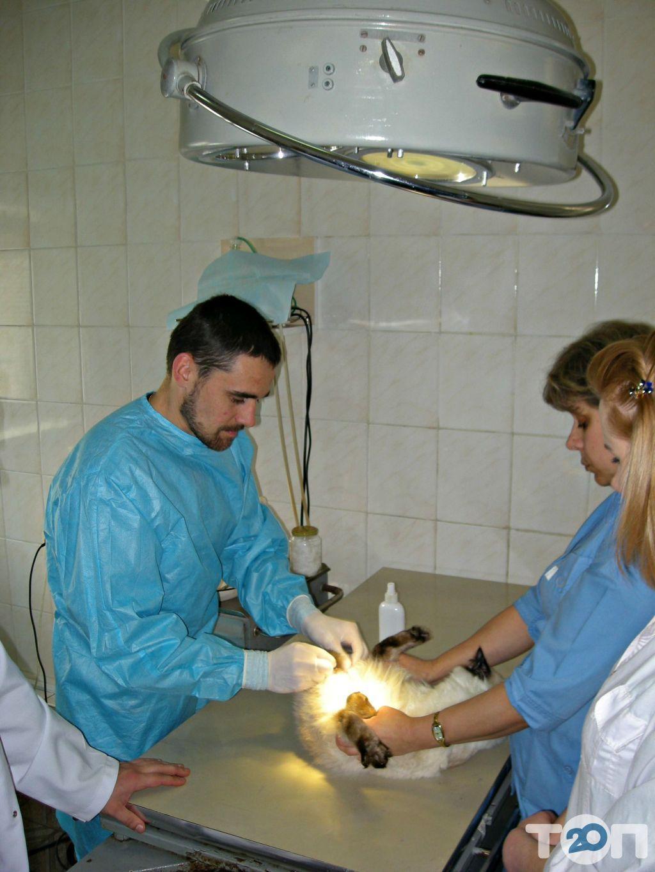Ветеринарная клиника - фото 4