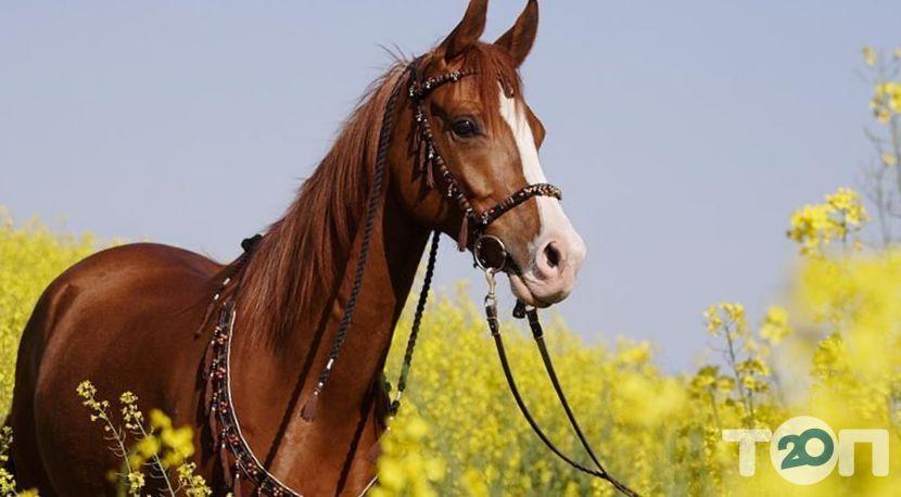 Винниччина, конно-спортивный клуб - фото 4