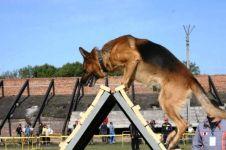 Клуб служебного собаководства - фото 1