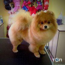 Happy Dog, салон по уходу за животными - фото 3