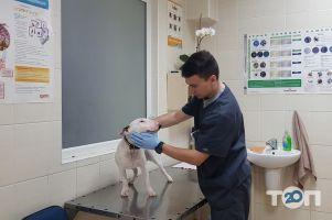 Doctor Zoo, ветеринарная клиника - фото 2