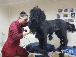 Doctor Zoo, ветеринарная клиника - фото 3