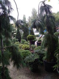 Botanica, садовый центр - фото 7
