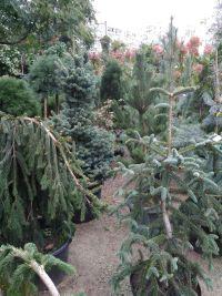 Botanica, садовый центр - фото 1