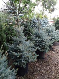 Botanica, садовый центр - фото 2