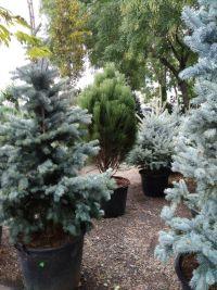 Botanica, садовый центр - фото 3