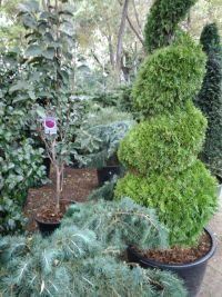 Botanica, садовый центр - фото 4
