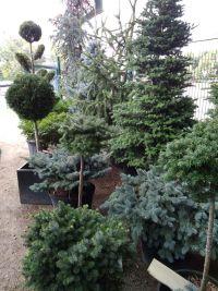 Botanica, садовый центр - фото 5