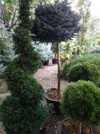Botanica, садовый центр - фото 6