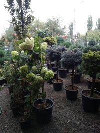 Botanica, садовый центр - фото 9