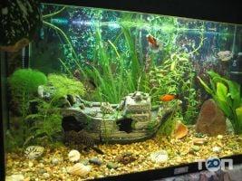 Аква Арт Студия, студия аквариумного дизайна - фото 1