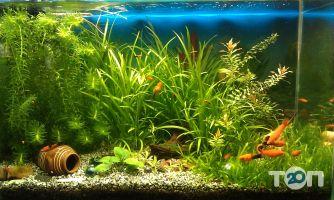 Аква Арт Студия, студия аквариумного дизайна - фото 2