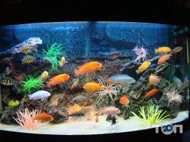 Аква Арт Студия, студия аквариумного дизайна - фото 4