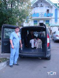 Айболит, ветеринарная клиника, груминг-салон, зоомагазин - фото 28
