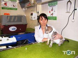 Айболит, ветеринарная клиника, груминг-салон, зоомагазин - фото 33