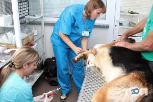 Багира, ветеринарная лечебница - фото 8