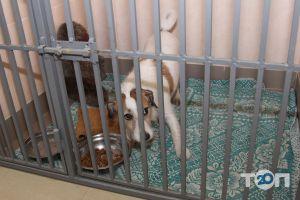 Багира, ветеринарная лечебница - фото 16