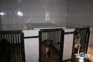 Багира, ветеринарная лечебница - фото 18