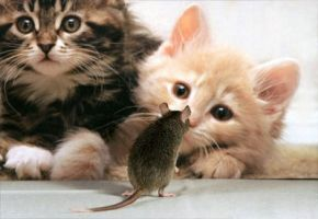 Центр здоровья животных - фото 8