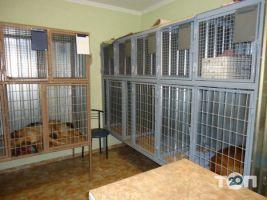 Ветеринарная клиника «Доктор Хвостус» - фото 2