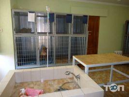 Ветеринарная клиника «Доктор Хвостус» - фото 3