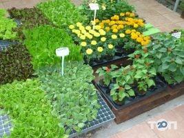 ФлоИрен, оптовая продажа рассады и горшечных цветов - фото 1