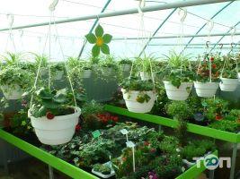 ФлоИрен, оптовая продажа рассады и горшечных цветов - фото 3