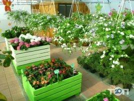 ФлоИрен, оптовая продажа рассады и горшечных цветов - фото 2