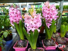 Green flora, склад-магазин цветов - фото 13