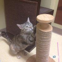 Колумбус, клиника ветеринарной медицины - фото 3