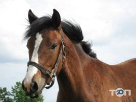 Княжий Двор, конно-спортивный комплекс - фото 2