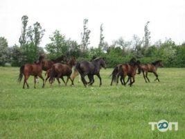 Княжий Двор, конно-спортивный комплекс - фото 4