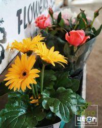 КвитоЦентр, гуртовня цветов - фото 2
