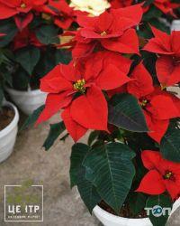 КвитоЦентр, гуртовня цветов - фото 4