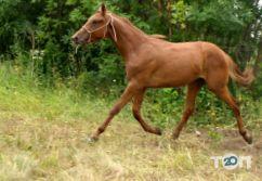 Maxikon, конно-спортивный клуб - фото 1