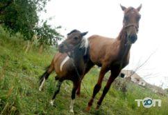 Maxikon, конно-спортивный клуб - фото 2