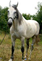 Maxikon, конно-спортивный клуб - фото 3