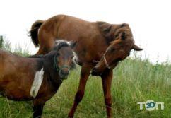 Maxikon, конно-спортивный клуб - фото 4