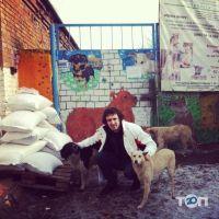 Помощь бездомным хвостикам, приют - фото 1