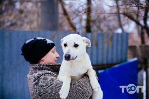 Помощь бездомным хвостикам, приют - фото 6