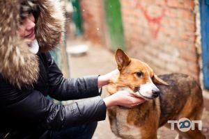 Помощь бездомным хвостикам, приют - фото 5