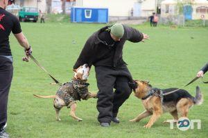 Школа Охоронних Собак АРЕС-АБРАЙ - фото 2