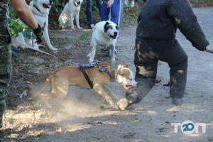 Школа Охоронних Собак АРЕС-АБРАЙ - фото 3