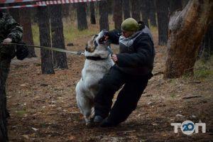 Школа Охоронних Собак АРЕС-АБРАЙ - фото 4