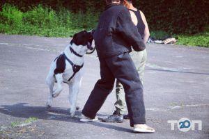 Школа Охоронних Собак АРЕС-АБРАЙ - фото 6