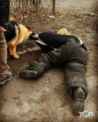 Школа Охоронних Собак АРЕС-АБРАЙ - фото 10