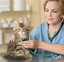 Tina, ветеринарная клиника Тина - фото 1