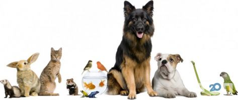 Tina, ветеринарная клиника Тина - фото 5