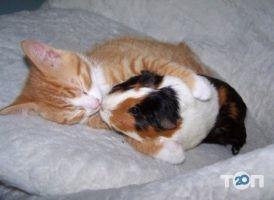 Tina, ветеринарная клиника Тина - фото 7