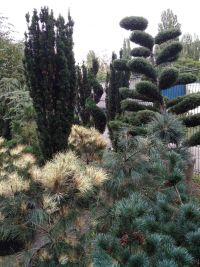 Botanica, садовый центр - фото 10